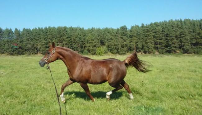 Поплатилася життям за дурість: у Харківській області кінь забив 14-річну дівчину. Прив'язала себе за талію